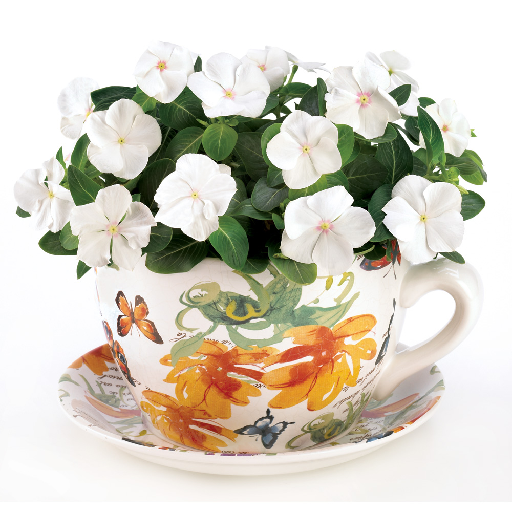 Butterfly Tropical Teacup Planter